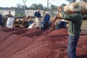 'Cởi trói' cho sàn giao dịch, nông sản sẽ bớt cảnh được mùa mất giá
