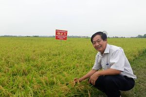 GS.TSKH Trần Duy Quý cha đẻ của nhiều giống lúa lai Việt Nam