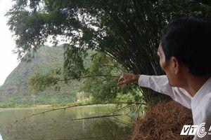 Đi tìm 'cha đẻ' của 3 con rắn khổng lồ trên đỉnh núi Mằn ở Quảng Ninh