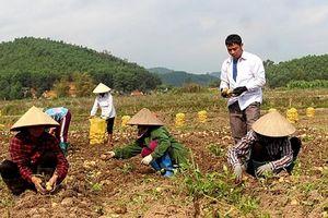 Tiêu thụ nông sản gắn với cung ứng vật tư nông nghiệp: Lợi ích kép