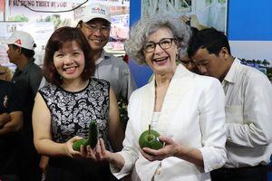 Bơ Đắk Nông tiếp cận thị trường thế giới nhờ hỗ trợ từ New Zealand