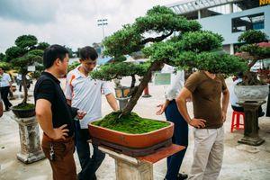 Hội chợ triển lãm sinh vật cảnh huyện Hoằng Hóa