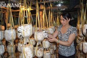Thoát nghèo nhờ trồng nấm - câu chuyện của Đà Nẵng