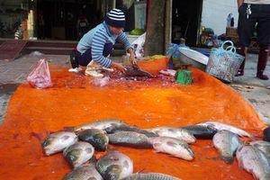 Quản lý an toàn thực phẩm thủy sản: Vẫn nhiều lỗ hổng