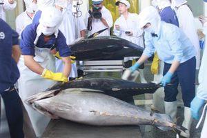 Xuất khẩu cá ngừ tăng tốc trở lại