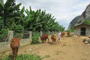 Agribank Thanh Hóa: Thúc đẩy phát triển nông nghiệp, nông thôn