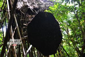 Nhà của 'Tarzan Việt Nam' còn nhiều bí ẩn