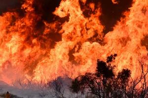Mỹ: Cháy rừng nghiêm trọng làm 5 người chết