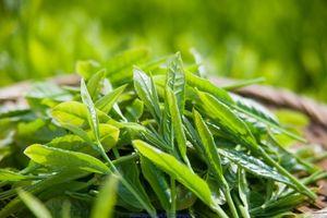 5 công thức làm đẹp da từ trà xanh các nàng cần lưu lại ngay