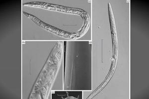 Hồi sinh sau 42.000 năm bị đóng băng