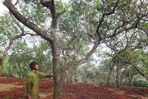 Dân mất mùa vì nhận thuốc trừ sâu hỗ trợ từ chính quyền