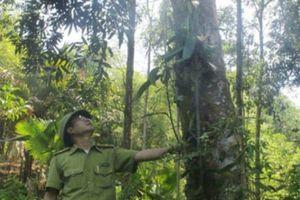 Nghĩ xa, làm lớn, lão nông này trồng bạt ngàn rừng gỗ lớn