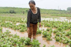 Nông nghiệp ĐBSH: Nhiều diện tích rau, màu bị thiệt hại sau mưa, lũ