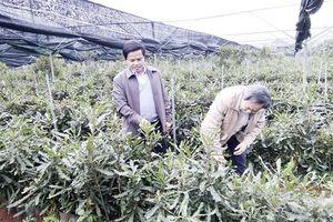 Quảng Trị: Doanh nghiệp FDI khốn khó vì... 'huyện hết đất'