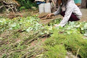 Huyện Thăng Bình quyết tâm làm OCOP với 26 sản phẩm chủ lực