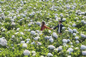 Tìm giải pháp phát triển du lịch gắn với nông nghiệp bền vững