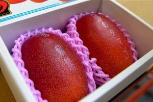 'Trứng mặt trời' đỏ rực, mua 2 quả biếu sếp hết nhẵn tháng lương