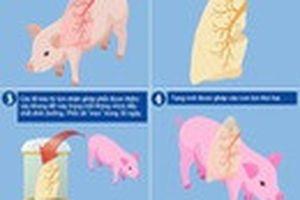Hy vọng mới cho người cần ghép tạng: Nuôi cấy thành công phổi mới