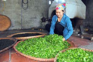 Thái Nguyên nâng cao hiệu quả kinh tế hợp tác xã