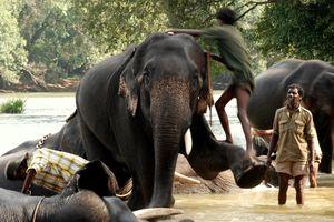 Người và voi tranh giành đất sống tại Ấn Độ