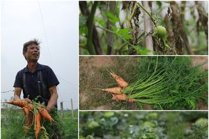 Nông nghiệp Hà Nội - những cánh đồng bị bỏ quên
