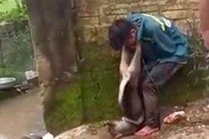 Đối tượng trộm chó bị đánh hội đồng, trói vào gốc cây