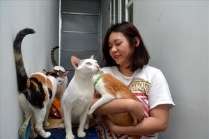 Bảo mẫu của những chú mèo bị bỏ rơi