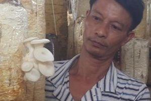 Ninh Bình: Tự học trồng loài nấm trắng như mây, U50 hái 10 triệu/tháng