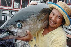 Chiến tranh thương mại Mỹ-Trung: Cơ hội cho cá ngừ Việt Nam