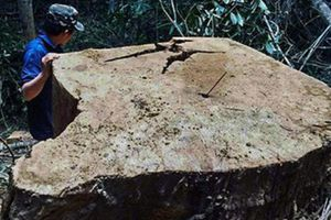 Thêm 3 tập thể, 4 quân nhân bị kỷ luật vì để lâm tặc phá rừng ở Gia Lai