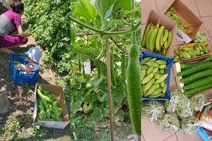 Choáng ngợp vườn rau sạch rộng 600m² đủ rau trái Việt của bà mẹ trẻ quê Thái Bình