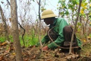 Nông dân Nam Đàn mất hàng chục tỷ đồng do hoa lý chết héo sau mưa bão
