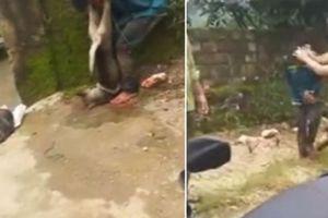 Clip 'cẩu tặc' bị đánh hội đồng, treo xác chó lên cổ