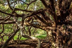 Khám phá khu rừng bí ẩn của 'phù thủy hắc ám' nổi tiếng nhất nước Anh
