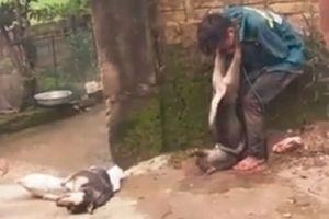 Thanh Hóa: Đánh bả trộm chó, 'cẩu tặc' bị dân vây đánh hội đồng