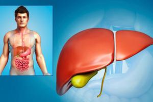 Công thức quét sạch độc tố ở gan chỉ trong 24 giờ rất phù hợp với người Việt