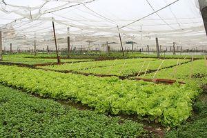 Đất đai nhỏ lẻ là nút thắt lớn nhất cản dòng đầu tư vào nông nghiệp