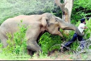 Vùng đất nơi hàng ngàn con voi 'nổi dậy' chống lại con người