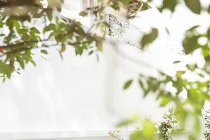 Lý Nhã Kỳ lãng mạn và bay bổng giữa vườn hồng
