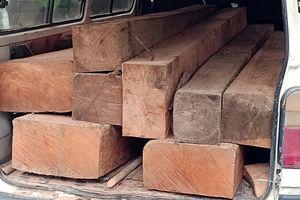 Tài xế không bằng lái chở gỗ lậu bon bon trên đường ở Quảng Nam