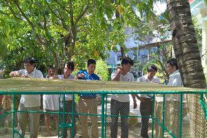Lồng lưới nuôi tôm hùm: Bền nhưng đắt