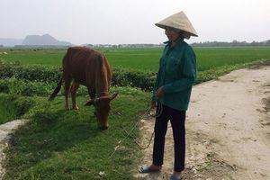 Kiểm tra việc nông dân chăn gia súc trên đồng phải đóng tiền