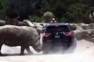 Tê giác điên cuồng húc tung ô tô trong công viên