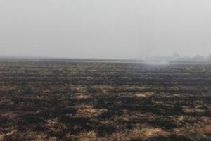 Nướng vịt ăn trưa, cháy cả đồng lúa thiệt hại 88 triệu đồng