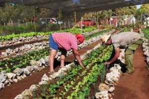 Cuba tạo điều kiện cho nông dân thuê đất sản xuất nông nghiệp