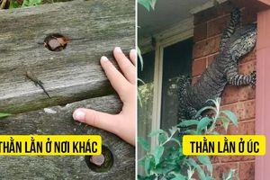 Hài hước 20 hình ảnh cho thấy sự khác biệt giật mình giữa Australia và phần còn lại thế giới