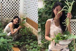 Vườn rau xanh mướt, ăn không hết phải đem bán bớt của Thủy Tiên khiến dân mạng 'phát thèm'