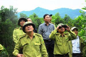 Phó Chủ tịch Quảng Nam tìm cách bảo vệ đàn voọc chà vá chân xám
