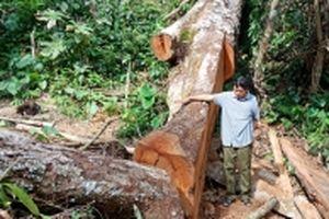 Xử lý nghiêm các vụ phá rừng tự nhiên