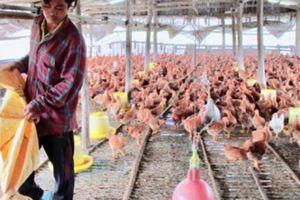 Vốn vay Agribank 'đẻ' lãi, Điện Bàn có nhiều tỷ phú